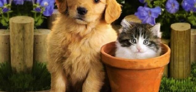 Kućni ljubimci i domaće životinje nisu izvor zaraze