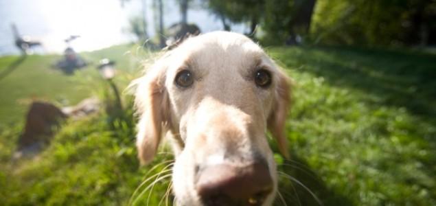 Psi dokazano otkrivaju rak pluća kod čovjeka