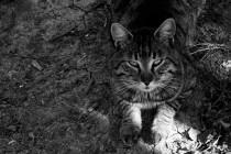 Ozren Kebo: Moj mali je opasan