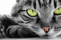 Kućne mačke uništavaju naš planet