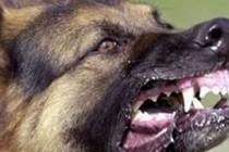 STRAVIČNO: Tinejdžericu napao i ubio čopor pasa