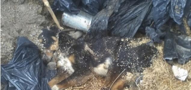 Oko azila u Prači nalaze se četiri grobnice za pse