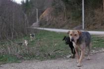 DOGS TRUST BIH:BROJ PASA LUTALICA U SARAJEVU STAGNIRA