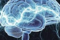 Kako funkcionira mozak?
