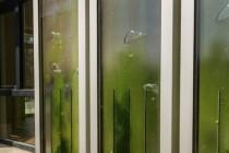 Zelene zgrade: stanovi koje pokreću alge