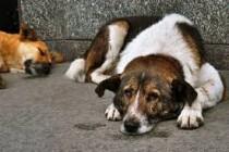 Dobra vijest: Sporni zakon o zaštiti životinja nije donesen