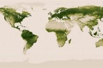 Koliko je zaista zelena Zemlja?