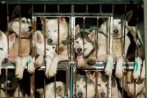 Šta je dobrobit životinja? Zlostavljanje životinja i psihološki profil zlostavljača Pravni aspekti zaštite životinja