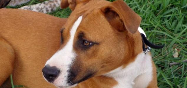Pravna zaštita životinja: Ko je nadležan za provođenje Zakona o zaštiti i dobrobiti životinja? Krivično djelo mučenje i ubijanje životinja