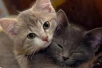 Zaštitimo životinje: Akcija prikupljanja pomoći za životinje od 16.-18.8.2013.
