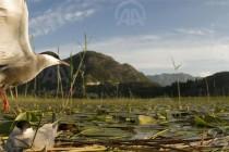 Dramatično upozorenje WWF-a: Izgradnja 500 novih hidroelektrana uništit će prirodne resurse cijelog Balkana