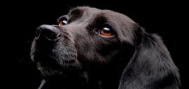 Rumunski ustavni sud dozvolio eutanaziju pasa lutalica