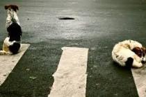 Navodeći slučaj napada na dijete, rumunjski predsjednik zatražio da se svi psi lutalice u Bukureštu uspavaju