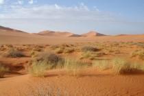 Spasioci pronašli 87 tijela migranata u Sahari, većinom žena i djece