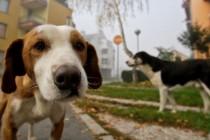 Razmislite prije nego što uzmete psa – smanjite broj napuštenih!