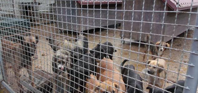 Azil za pse u Prijedoru