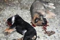 Dvojica desetogodišnjaka na najmostruozniji način ubili su devet napuštenih štenaca