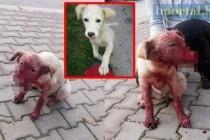 Živinice: Strašna povreda psa koji je ostao bez njuške