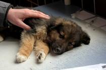 BiH razmatra o eutanaziji uličnih pasa