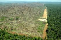 Amazon: U ovoj godini uništeno 5.843 km2 šume