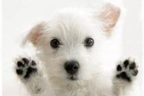 STAV FONDACIJE ZA PSE DOGS TRUST O PRIJEDLOGU UVOĐENJA KLAUZULE O EUTANAZIJI U AZILIMA U ZAKON O ZAŠTITI I DOBROBITI ŽIVOTINJA