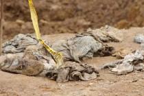Identificirano ukupno 100 žrtava iz masovne grobnice Tomašica
