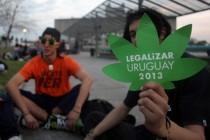 Urugvaj legalizovao uzgoj, prodaju i konzumaciju marihuane