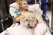 Psu dozvoljeno da tokom operacije bude u operacionoj sali kako bi doktore upozorio na eventualne alergijske reakcije