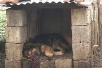 Stigli prvi rezultati rada vlasti:  Pucano na kuću Nurije Murselovića, ubijeno više vlasničkih pasa