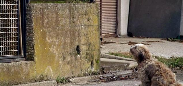 Nakon što je izbačen na ulicu, Max danima tužno cvili ispred gazdinog doma
