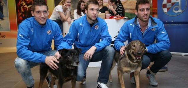 Dinamovci su spasili pse, Ivo Pinto i Jerko Leko imaju ih pet