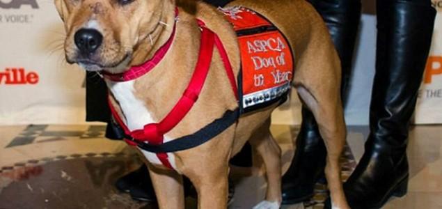 Xena pas godine pomogla dječaku oboljelom od autizma