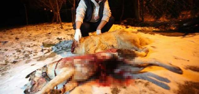 Usvojen Prijedlog zakona o ubijanju pasa: Za krv spremni!