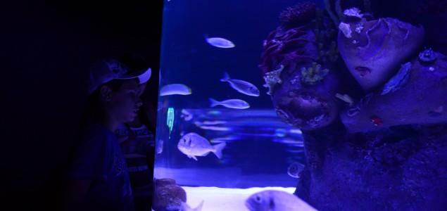 Turska: Antalija dom najdužem tunel akvarijumu