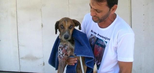 Pas lutalica spašen od gladi i crvi!