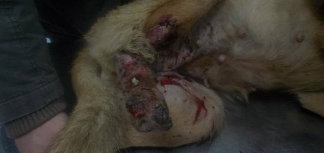 Dokle će zlostavljači životinja prolaziti nekažnjeno?