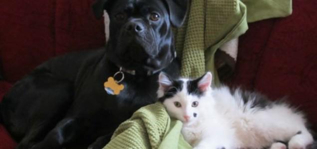 IMALA JE SAMO 2 DANA: Bila je na ivici smrti a onda je naišao pas…