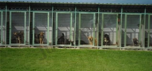 Zenica: Azil za pse do kraja juna