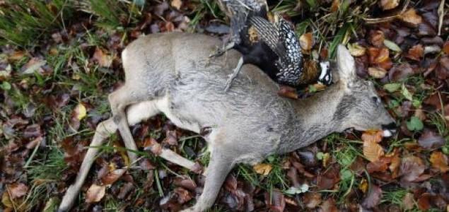 """Albanija na dve godine zakonom """"ukida"""" lov i lovce"""