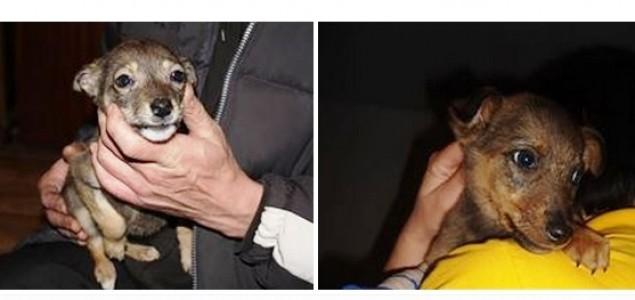 Zaštitnik životinja koji je pustio dva psa da umru od gladi!