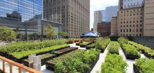 Urbane farme na krovovima zgrada New Yorka