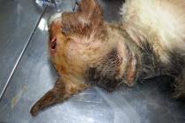 Pas brutalno pretučen na smrt u Kotor Varoši