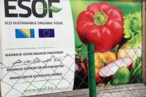 Bh. čudo: Povrće prodato 15 godina unaprijed