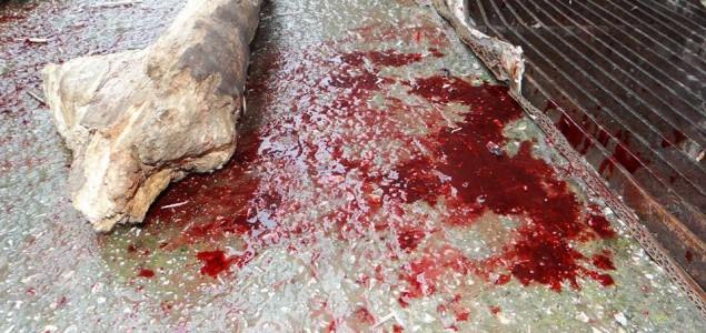 Pokolj napuštenih pasa u Sarajevu