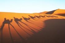 Na zajedničkom putovanju do Sahare!