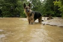 DRAMA U UBU: Prihvatilište potopljeno, 130 pasa oslobođeno iz boksova i prepušteni sami sebi!