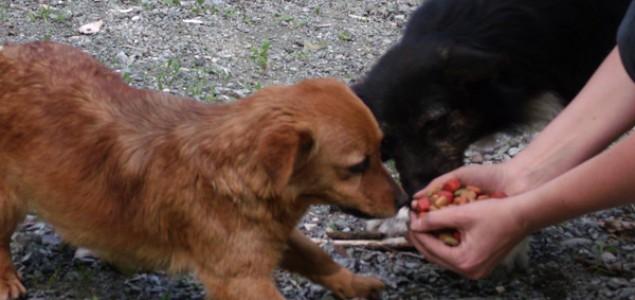 Aktivisti iz Sarajeva posjetili azil za pse u Doboju