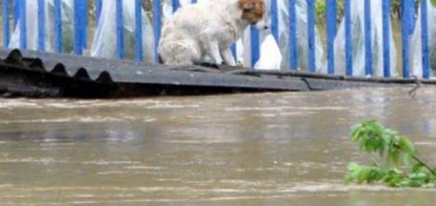 17 kamiona prikuplja leševe životinja stradalih u poplavi