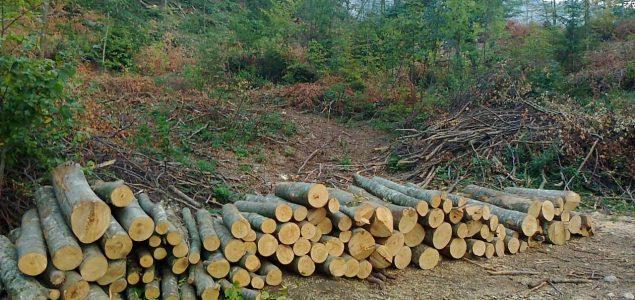 Povodom Svjetskog dana šuma: Zastupnica Sanela Klarić inicira rješenja u zakonskoj regulativi za gospodarenje šumama