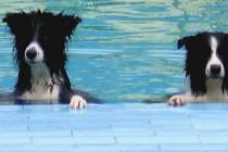 Luksuz u poznim godinama: U Japanu se otvara prvi starački dom za pse